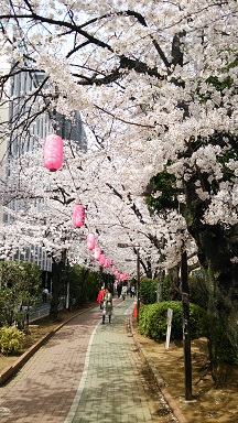 満開の桜-3.jpg